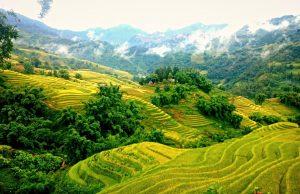 Sapa rijstvelden