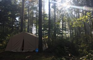 wildkamperen in Nederland