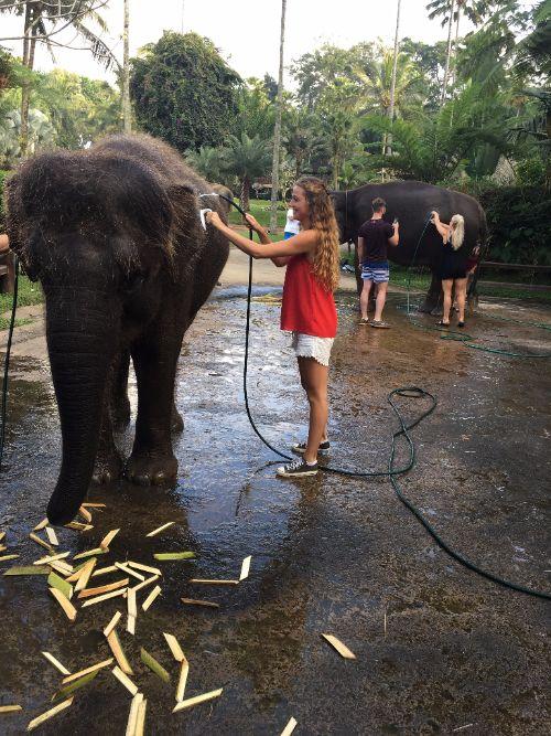 Olifanten wassen in Bali